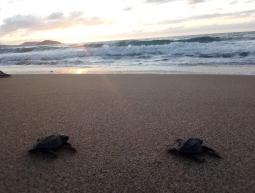 VIVE18.19.02 Sea Turtles Conservation XV/2019/Méxic